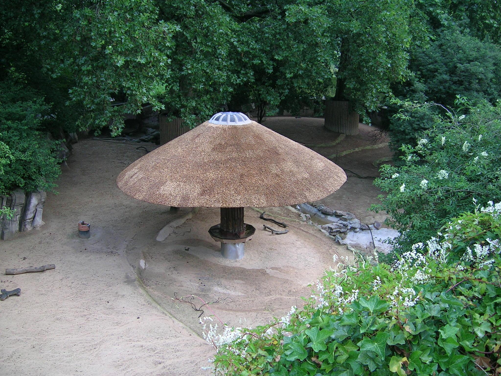 Rieten daken Van Camp - zoo Antwerpen - nieuw dak